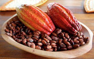 История появления какао и создания шоколада