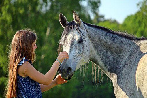 Фото Лошадь Всемирный день животных.