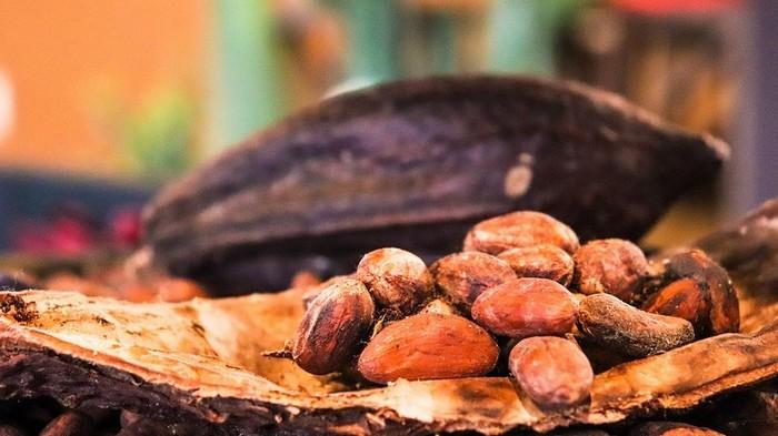 flavonoidy v shokolade