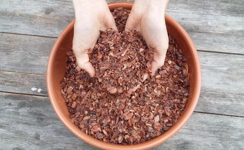 Фото шелуха какао бобов.